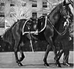 Riderless stallion at JFK funeral