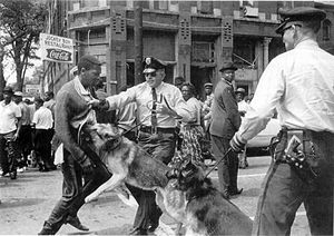 Dogs attack in Birmingham